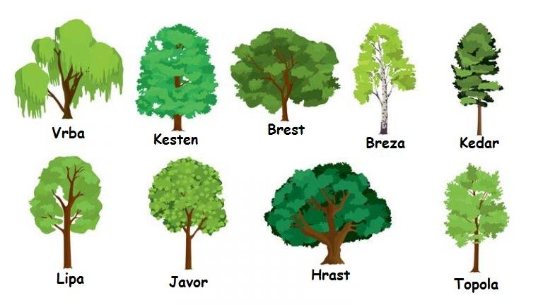 Izaberite drvo i saznajte kakve su vam prognoze za 2018. godinu