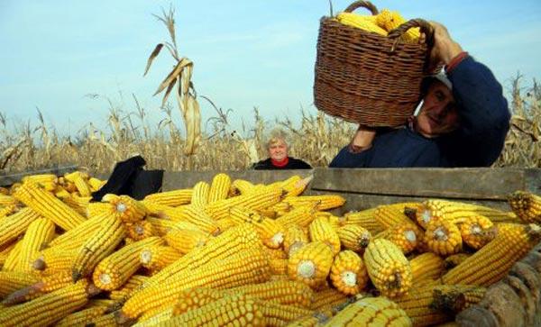 Odlični uslovi za razvoj poljoprivrede sprečili odlazak mladih iz sela