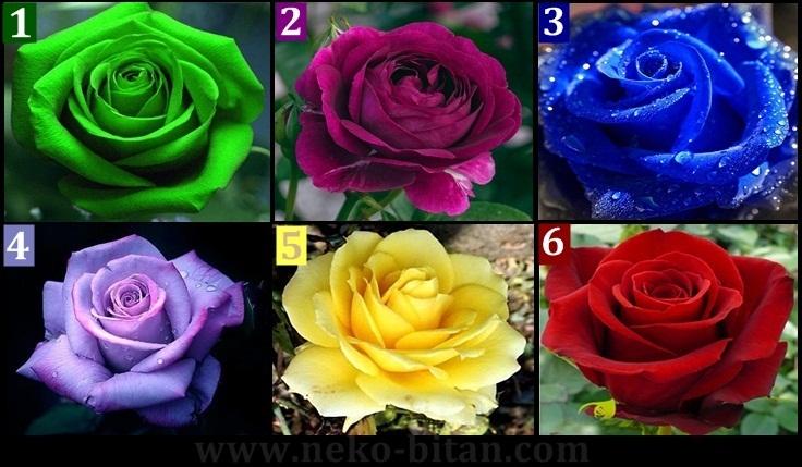 Izaberite najlepšu ružu i otkrijte ATRAKTIVNU MISTERIJU vašeg karaktera – Precizna analiza!