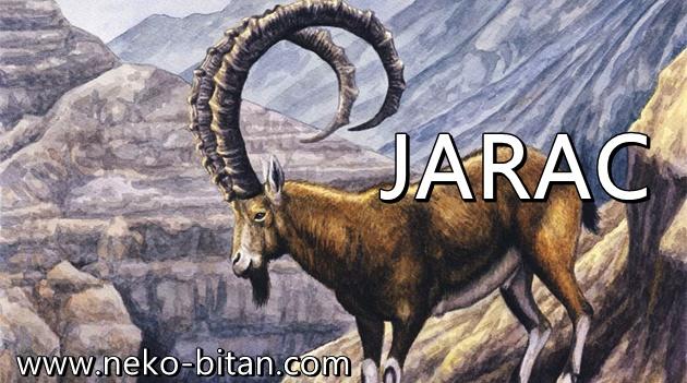 JARAC: Ume da voli DO NEBA, ali ume i da bude GORI OD ĐAVOLA ako treba!