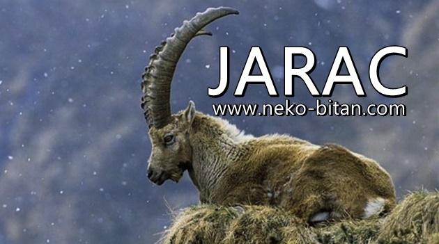 JARAC je SPOSOBAN i HRABAR ČOVEK koji može da URADI sve ŠTO ZAMISLI i zbog toga mu mnogi ZAVIDE!