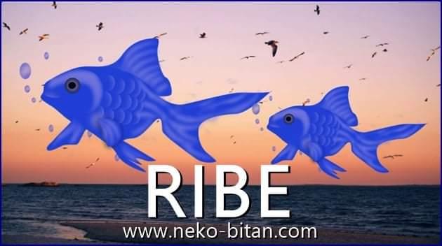 RIBE: Možda izgledaju NAIVNO, ali kada brane ono ŠTO VOLE, spremne su na SVE!