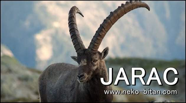 JARAC: U životu je SVE POSTIGAO sa svojih DESET PRSTIJU i zato on MIRNO SPAVA!