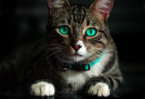 Evo zašto se kaže da mačke imaju devet života!